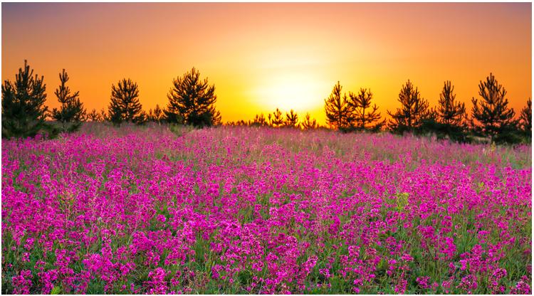 sunset-hill